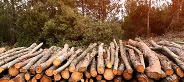 Houtstook is een ramp, want bomen groeien erg traag