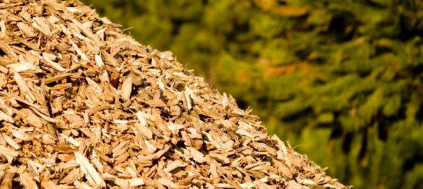 'EU-beleid volgt roekeloze veronderstelling dat boshout verbranden koolstofneutraal is'
