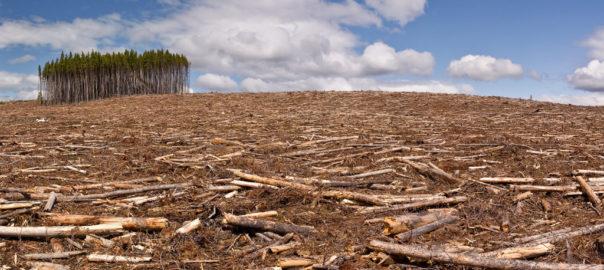 Hoogleraren en internationale milieu-organisaties tekenen open brief tegen biomassa in Diemen