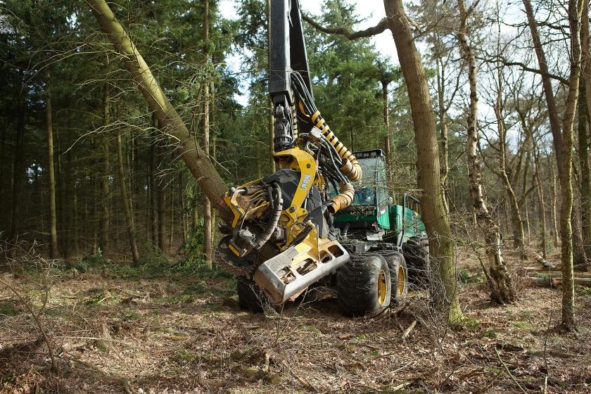 Greenpeace spreekt zich uit over biomassa!